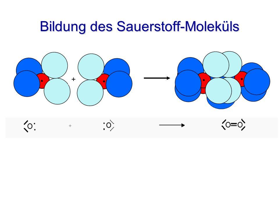 Bildung des Sauerstoff-Moleküls +