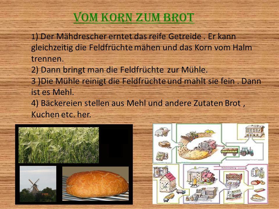 Vom Korn zum Brot 1 ) Der Mähdrescher erntet das reife Getreide. Er kann gleichzeitig die Feldfrüchte mähen und das Korn vom Halm trennen. 2) Dann bri
