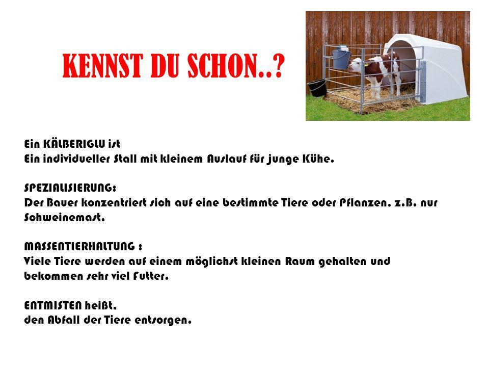 KENNST DU SCHON..? Ein KÄLBERIGLU ist Ein individueller Stall mit kleinem Auslauf für junge Kühe. SPEZIALISIERUNG: Der Bauer konzentriert sich auf ein