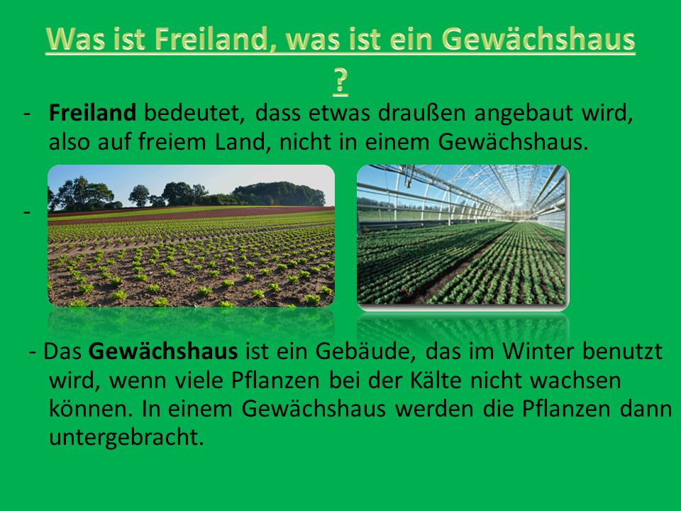 -Freiland bedeutet, dass etwas draußen angebaut wird, also auf freiem Land, nicht in einem Gewächshaus.