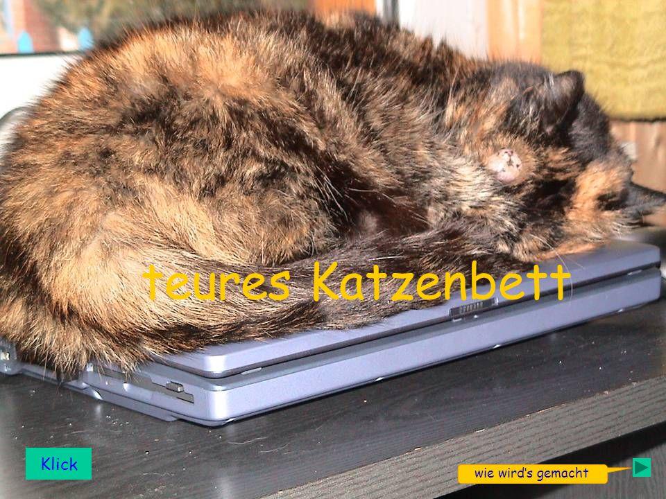 1 teures Katzenbett Klick wie wirds gemacht