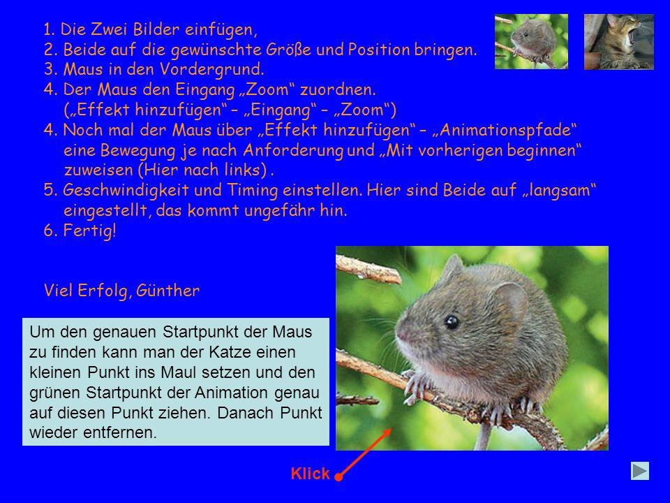 1. Die Zwei Bilder einfügen, 2. Beide auf die gewünschte Größe und Position bringen. 3. Maus in den Vordergrund. 4. Der Maus den Eingang Zoom zuordnen