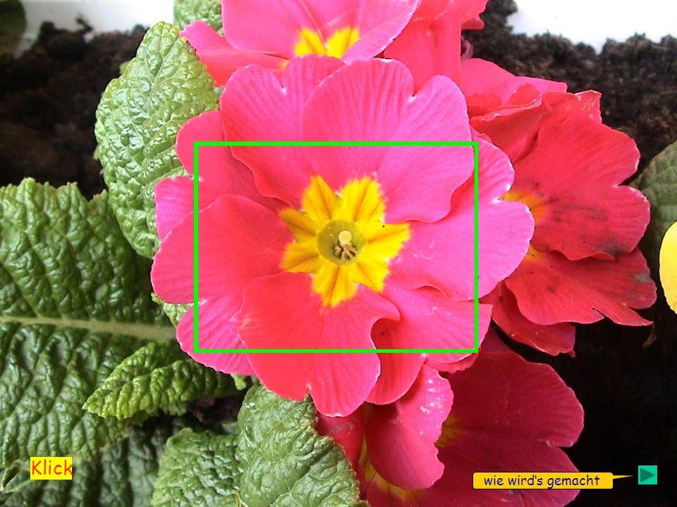 Das Bild zweimal einfügen Das untere Bild mit dem Schneidwerkzeug auf die Größe des gewünschten Ausschnittes zuschneiden.