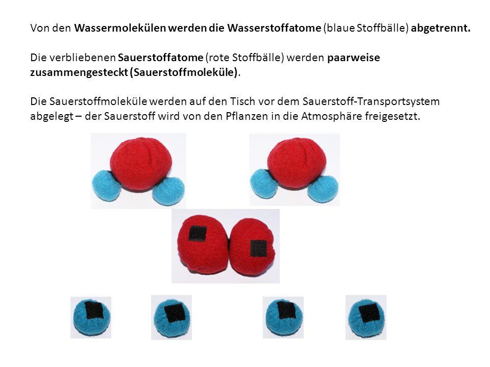Von den Wassermolekülen werden die Wasserstoffatome (blaue Stoffbälle) abgetrennt. Die verbliebenen Sauerstoffatome (rote Stoffbälle) werden paarweise