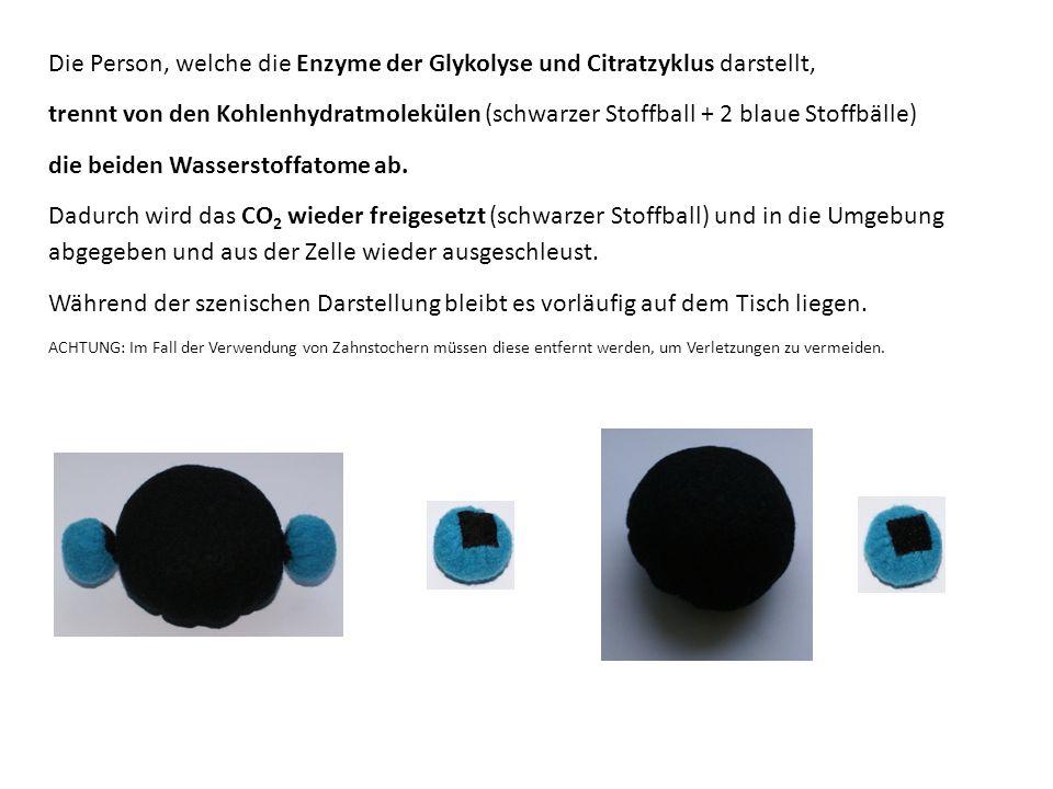 Die Person, welche die Enzyme der Glykolyse und Citratzyklus darstellt, trennt von den Kohlenhydratmolekülen (schwarzer Stoffball + 2 blaue Stoffbälle