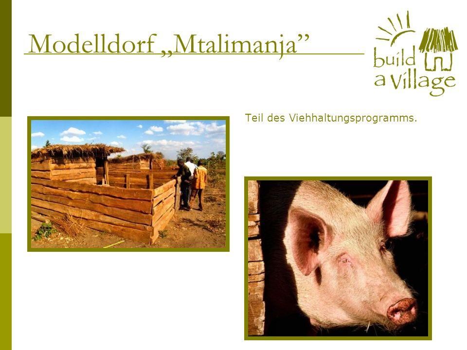 Teil des Viehhaltungsprogramms. Modelldorf Mtalimanja