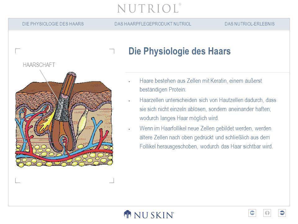 DIE PHYSIOLOGIE DES HAARSDAS HAARPFLEGEPRODUKT NUTRIOLDAS NUTRIOL-ERLEBNIS Die Physiologie des Haars Haare werden in Follikeln unterhalb der Hautoberfläche gebildet.