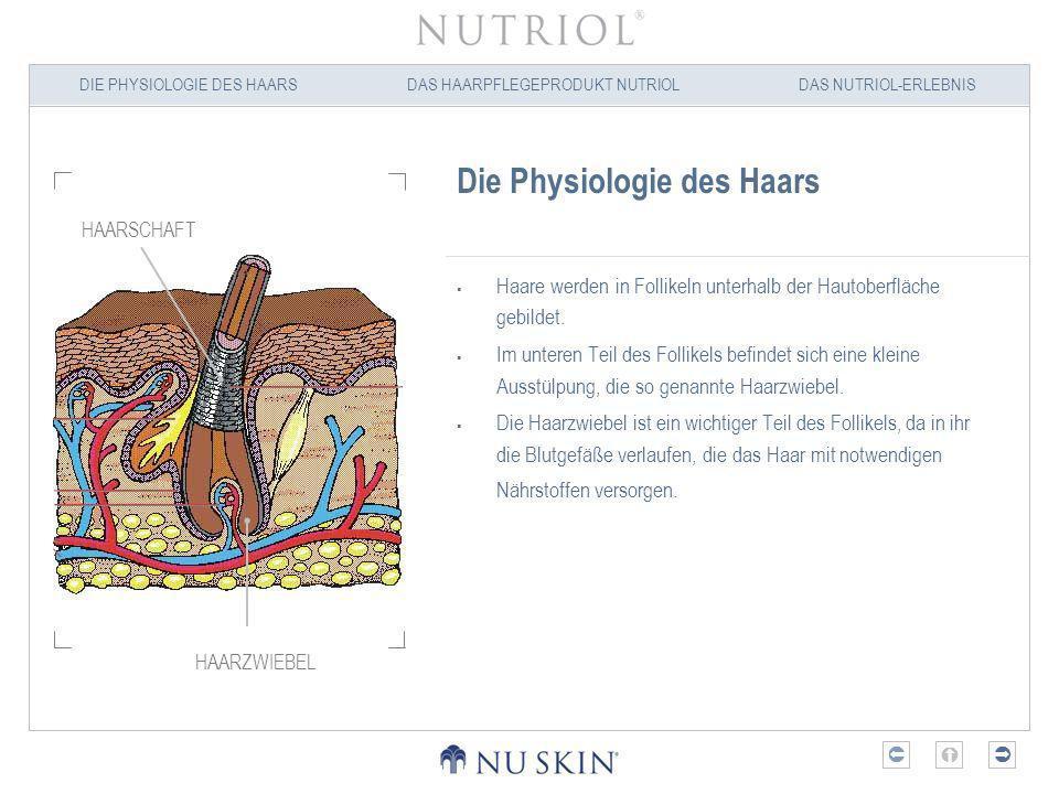 DIE PHYSIOLOGIE DES HAARSDAS HAARPFLEGEPRODUKT NUTRIOLDAS NUTRIOL-ERLEBNIS Die Physiologie des Haars Jeder Haarfollikel durchläuft während seines Wachstumszyklus drei Phasen: Die Wachstumsphase oder Anagenphase Die Ruhephase oder Katagenphase Die Abstoßungsphase oder Telogenphase ANAGEN- PHASE KATAGEN- PHASE TELOGEN- PHASE FRÜHE ANAGEN- PHASE