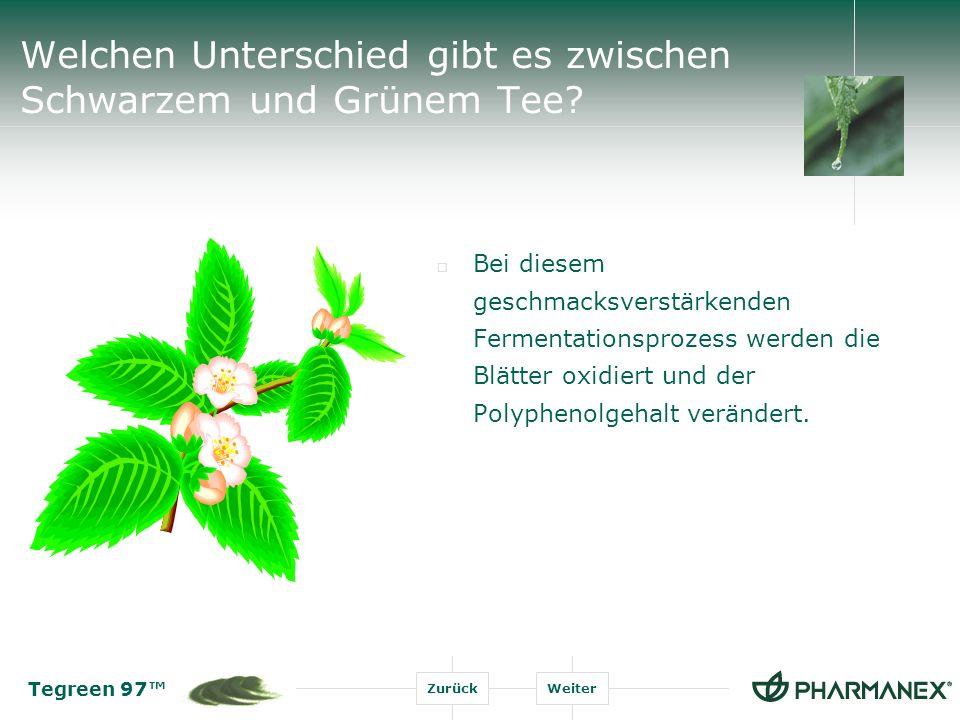 Tegreen 97 ZurückWeiter Welchen Unterschied gibt es zwischen Schwarzem und Grünem Tee.