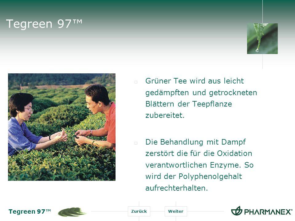 Tegreen 97 ZurückWeiter Tegreen 97 Bei der Verarbeitung des Grünen Tees entsteht ein Produkt, dessen chemische Zusammensetzung der von frischen Teeblättern ähnelt.