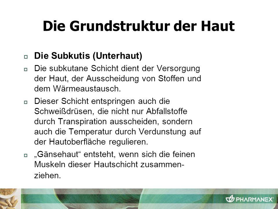 Die Subkutis (Unterhaut) Die subkutane Schicht dient der Versorgung der Haut, der Ausscheidung von Stoffen und dem Wärmeaustausch. Dieser Schicht ents