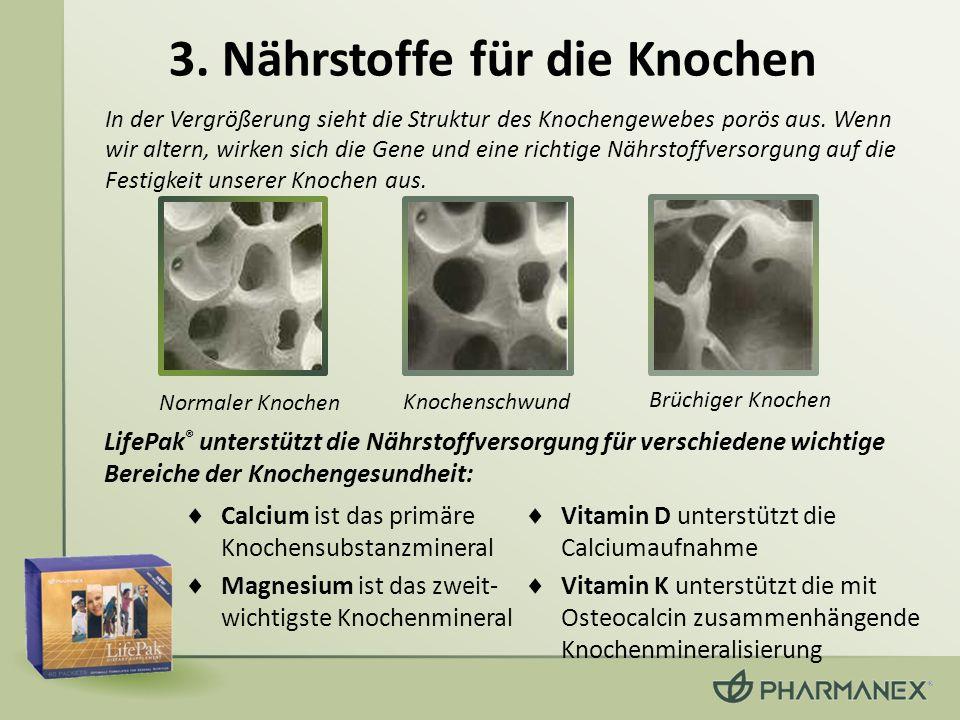 3. Nährstoffe für die Knochen Normaler Knochen Knochenschwund Brüchiger Knochen Calcium ist das primäre Knochensubstanzmineral Magnesium ist das zweit