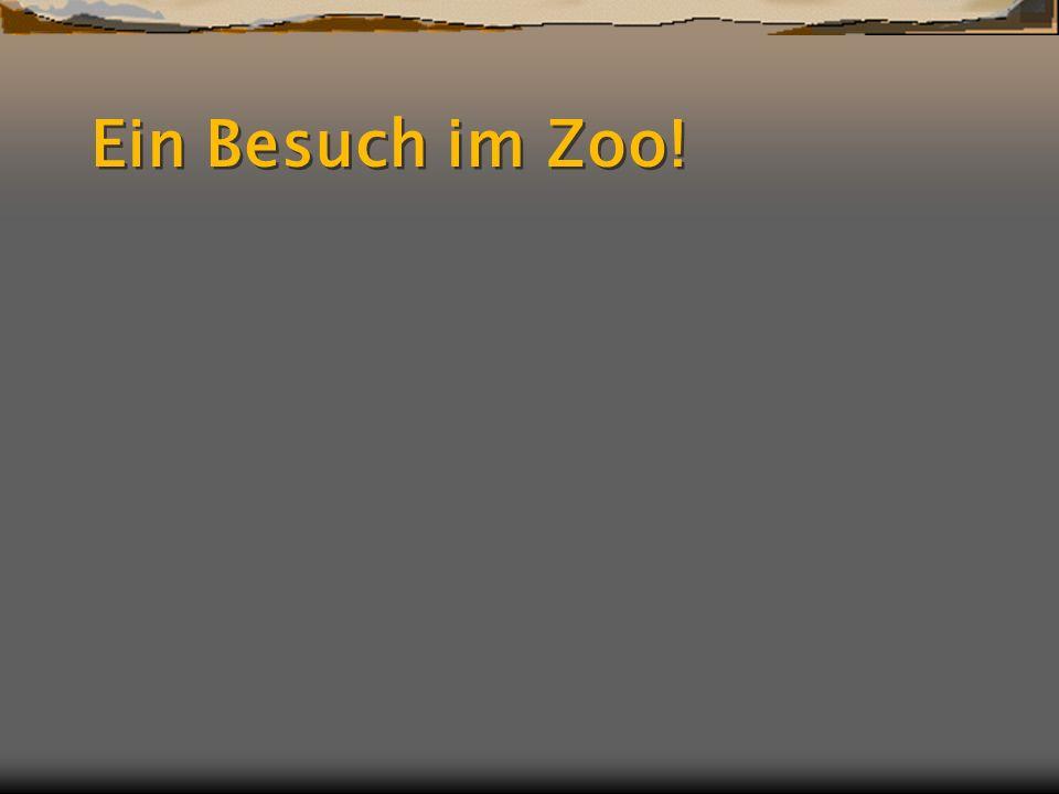 Ein Besuch im Zoo!