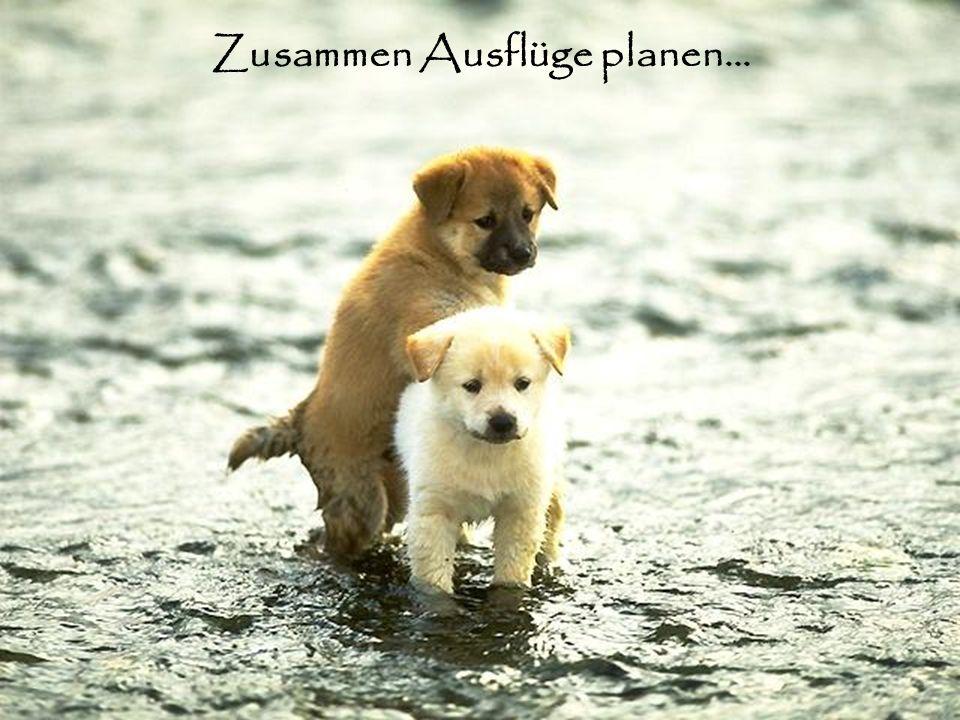 Zusammen Ausflüge planen…
