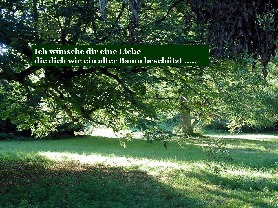 Ich wünsche dir eine Liebe die dich wie ein alter Baum beschützt …..