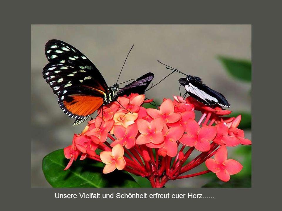 Unsere Vielfalt und Schönheit erfreut euer Herz......