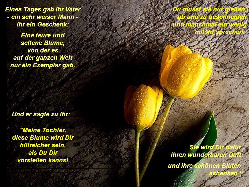 Eines Tages gab ihr Vater - ein sehr weiser Mann - ihr ein Geschenk: Eine teure und seltene Blume, von der es auf der ganzen Welt nur ein Exemplar gab.