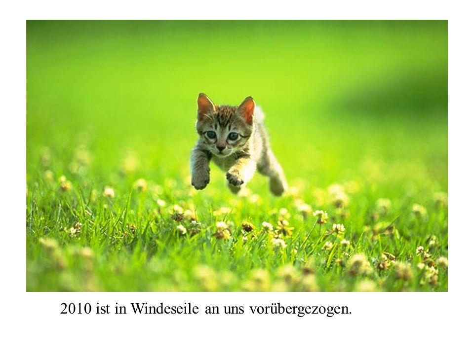 2010 ist in Windeseile an uns vorübergezogen.