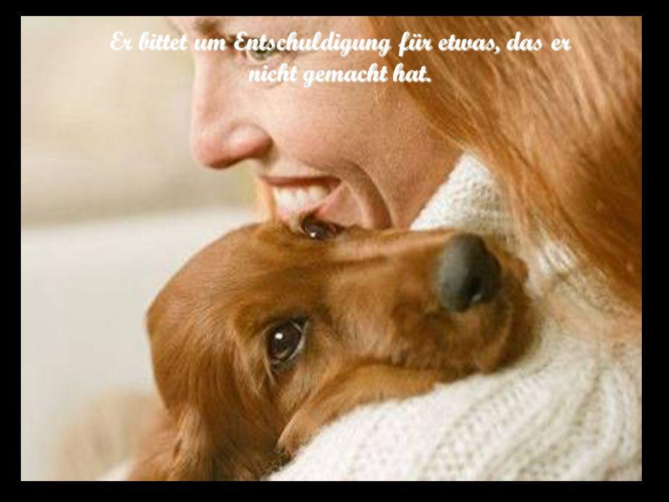 Ein Hund verlässt uns nicht, auch wenn wir ihn nicht gut behandeln