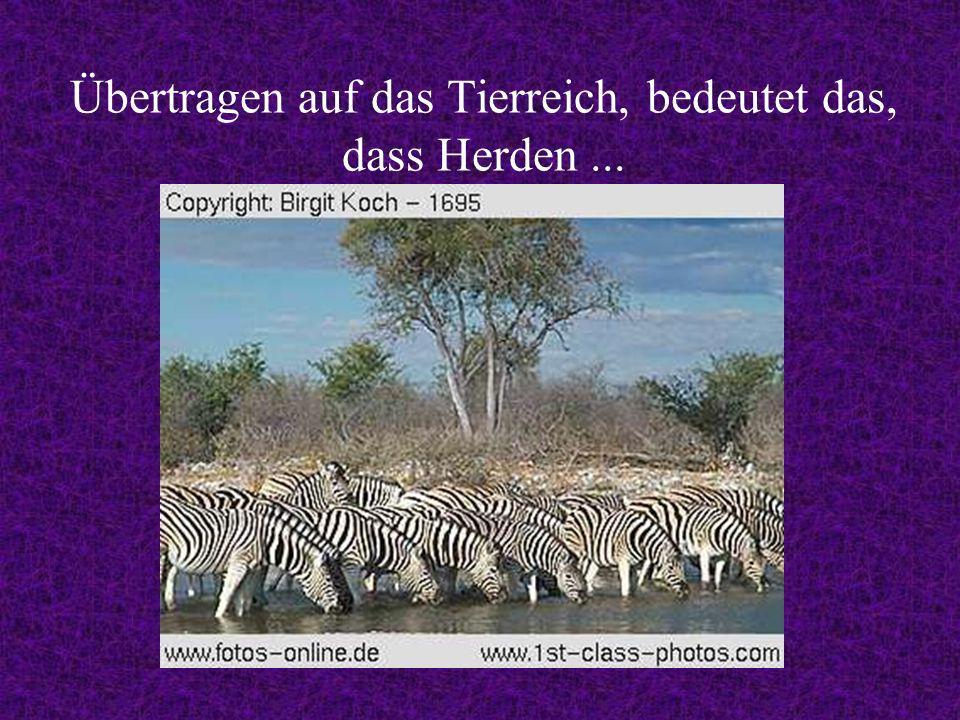 Übertragen auf das Tierreich, bedeutet das, dass Herden...
