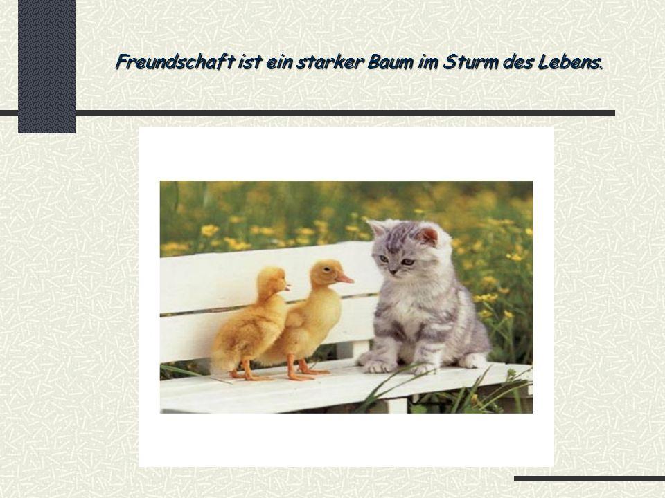 Freundschaft ist ein starker Baum im Sturm des Lebens.