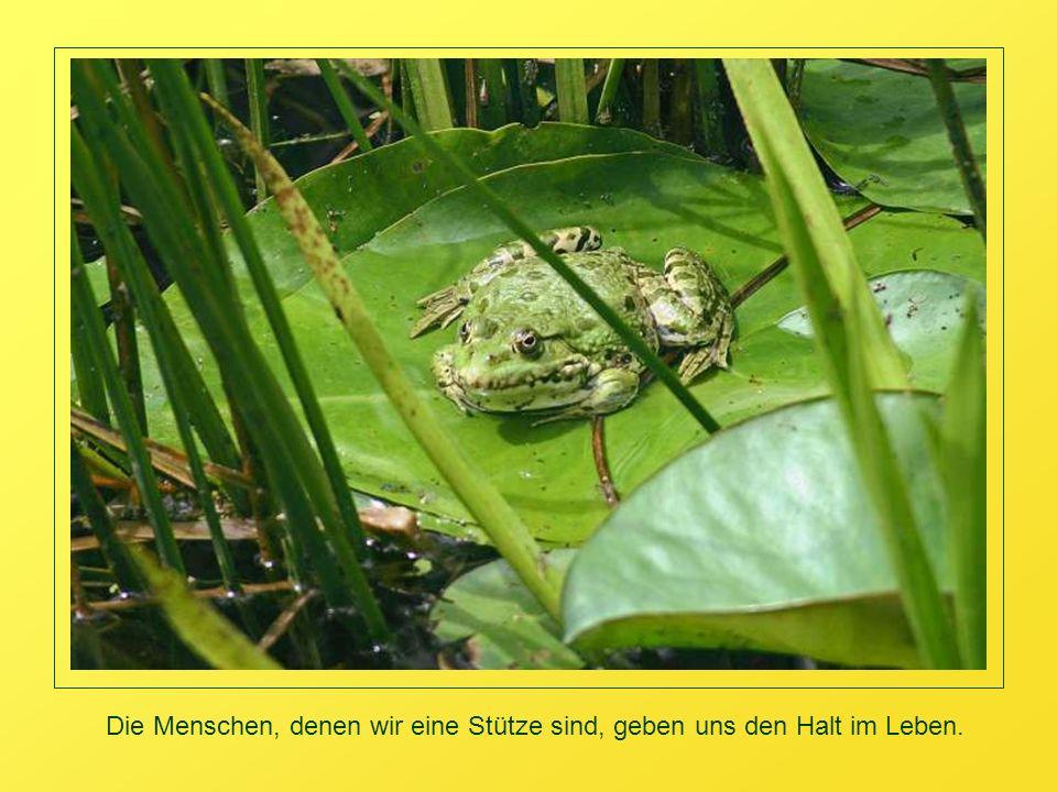 Musik: Bilitis, Jack FenderTexte: Marie von Ebner-Eschenbach