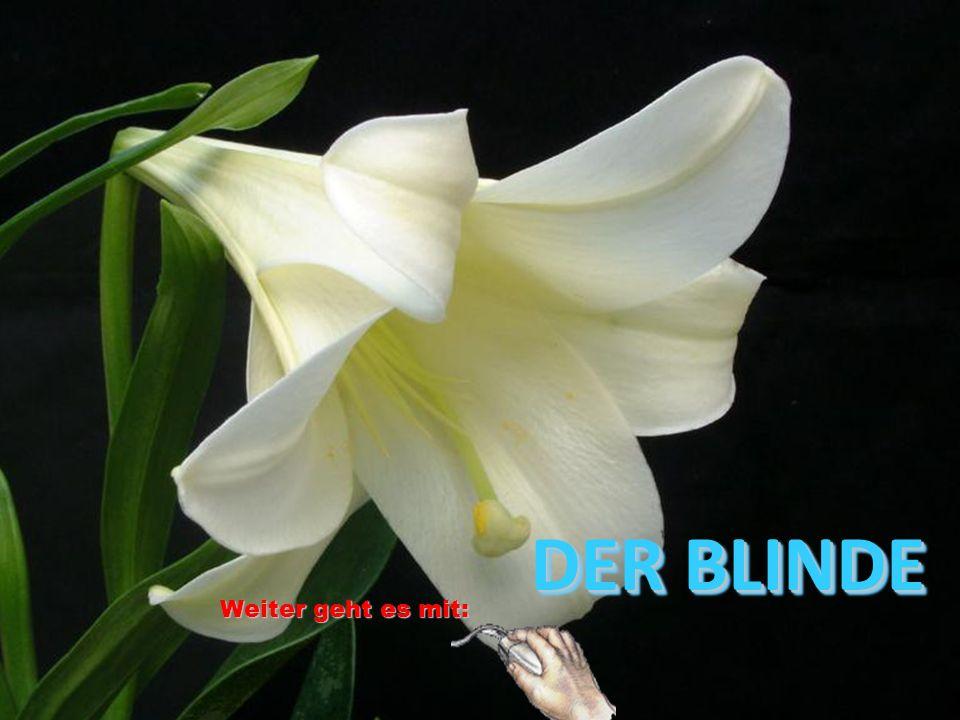 DER BLINDE DER BLINDE Weiter geht es mit: Weiter geht es mit: