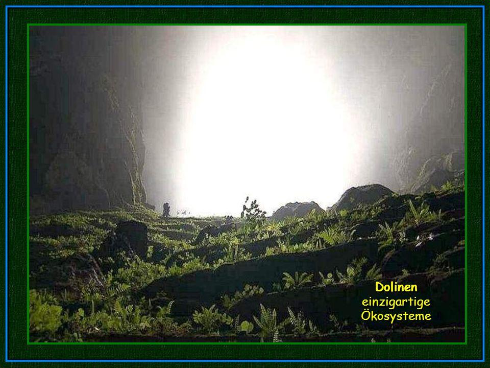 Eine Doline: Ein Mini-Dschungel 400 m unter der Oberfläche. Dolinen entstehen, wenn eine Höhlendecke zusammenbricht und so dem Tageslicht ermöglicht,