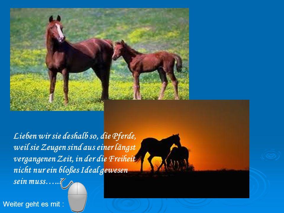 Lieben wir sie deshalb so, die Pferde, weil sie Zeugen sind aus einer längst vergangenen Zeit, in der die Freiheit nicht nur ein bloßes Ideal gewesen