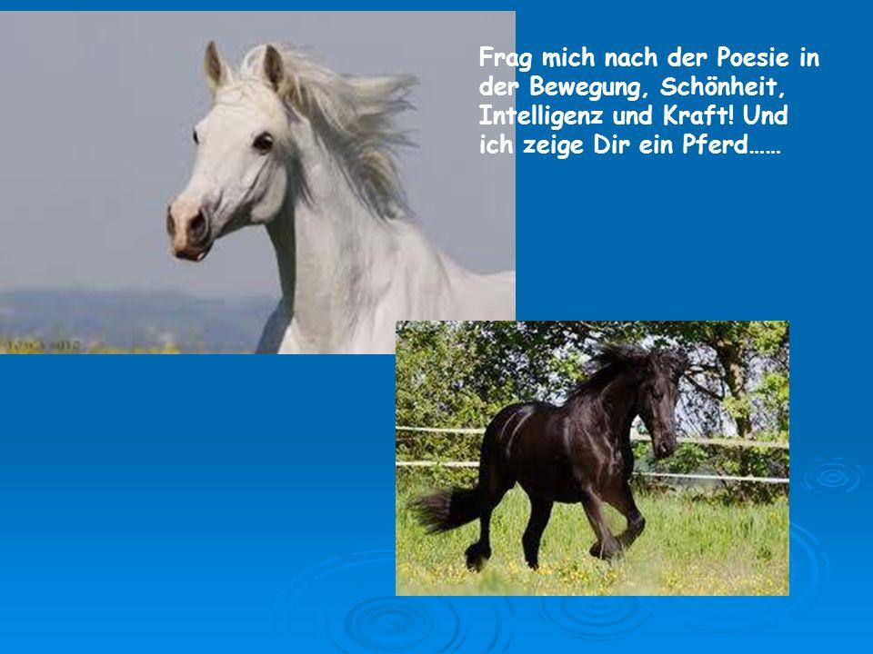 Frag mich nach der Poesie in der Bewegung, Schönheit, Intelligenz und Kraft! Und ich zeige Dir ein Pferd……