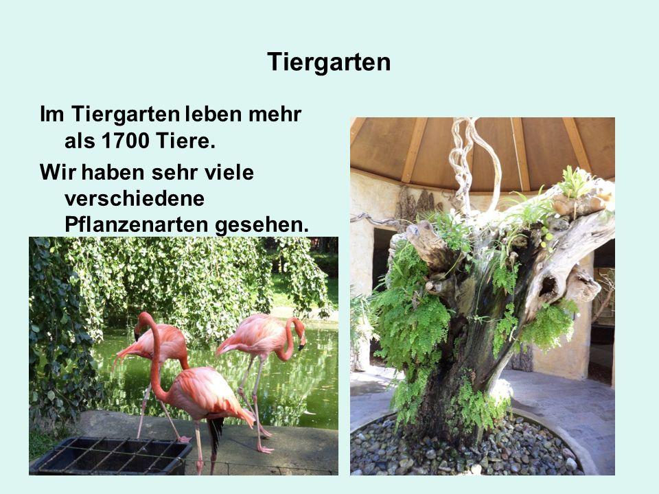 Tiergarten Im Tiergarten leben mehr als 1700 Tiere.