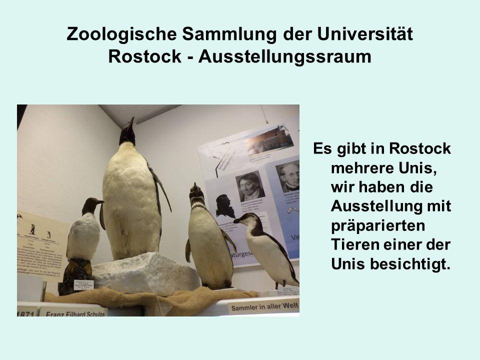 Zoologische Sammlung der Universität Rostock - Ausstellungssraum Es gibt in Rostock mehrere Unis, wir haben die Ausstellung mit präparierten Tieren einer der Unis besichtigt.