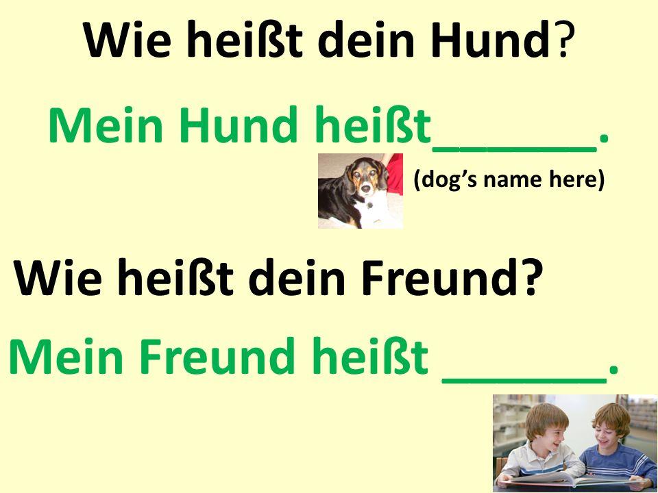 Wie heißt dein Hund? Mein Hund heißt______. (dogs name here) Wie heißt dein Freund? Mein Freund heißt ______.
