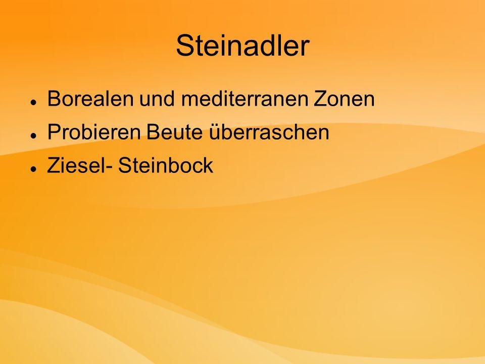 Steinadler Borealen und mediterranen Zonen Probieren Beute überraschen Ziesel- Steinbock