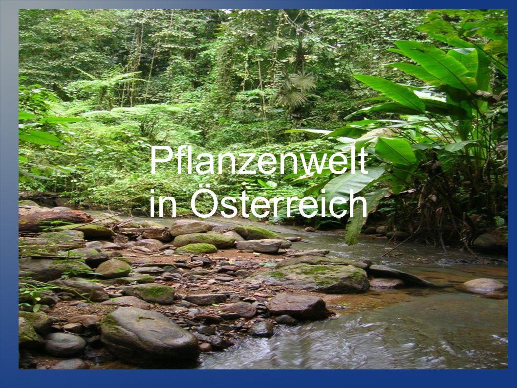 Pflanzenwelt in Österreich