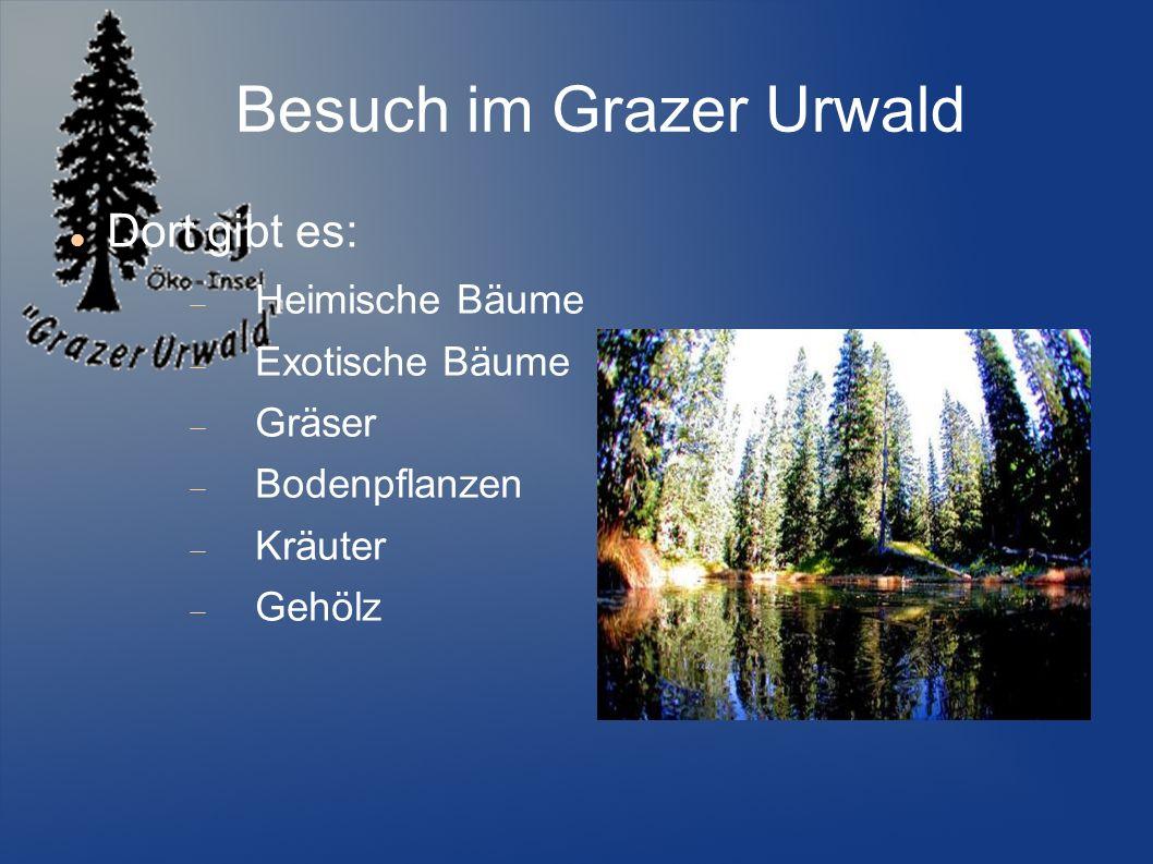 Besuch im Grazer Urwald Dort gibt es: Heimische Bäume Exotische Bäume Gräser Bodenpflanzen Kräuter Gehölz