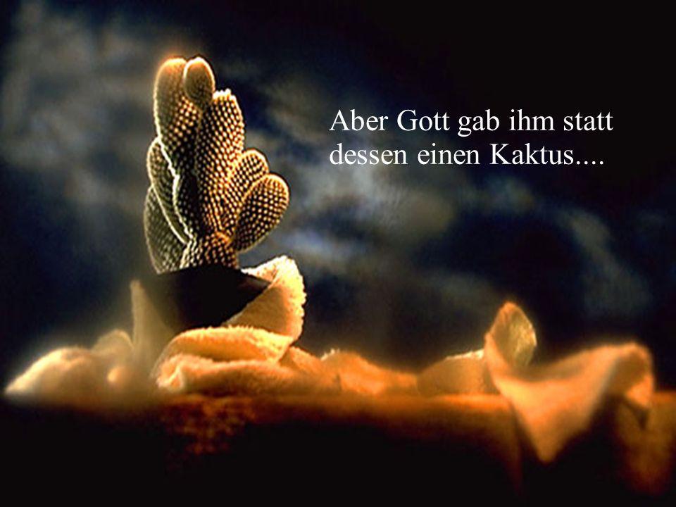 Aber Gott gab ihm statt dessen einen Kaktus....