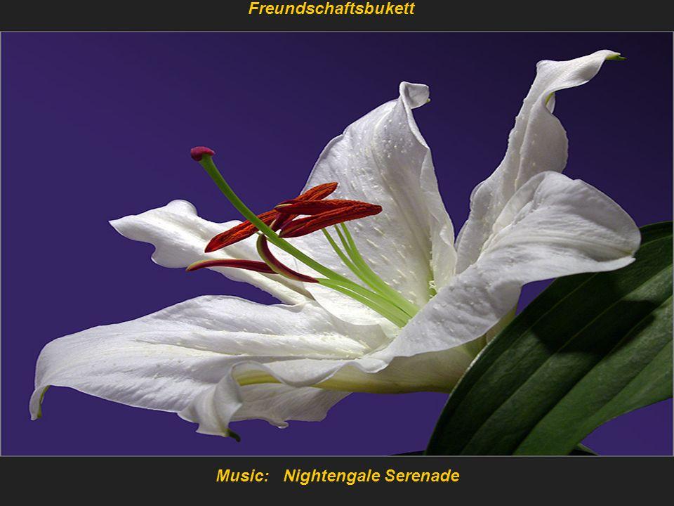 Music: Nightengale Serenade Freundschaftsbukett