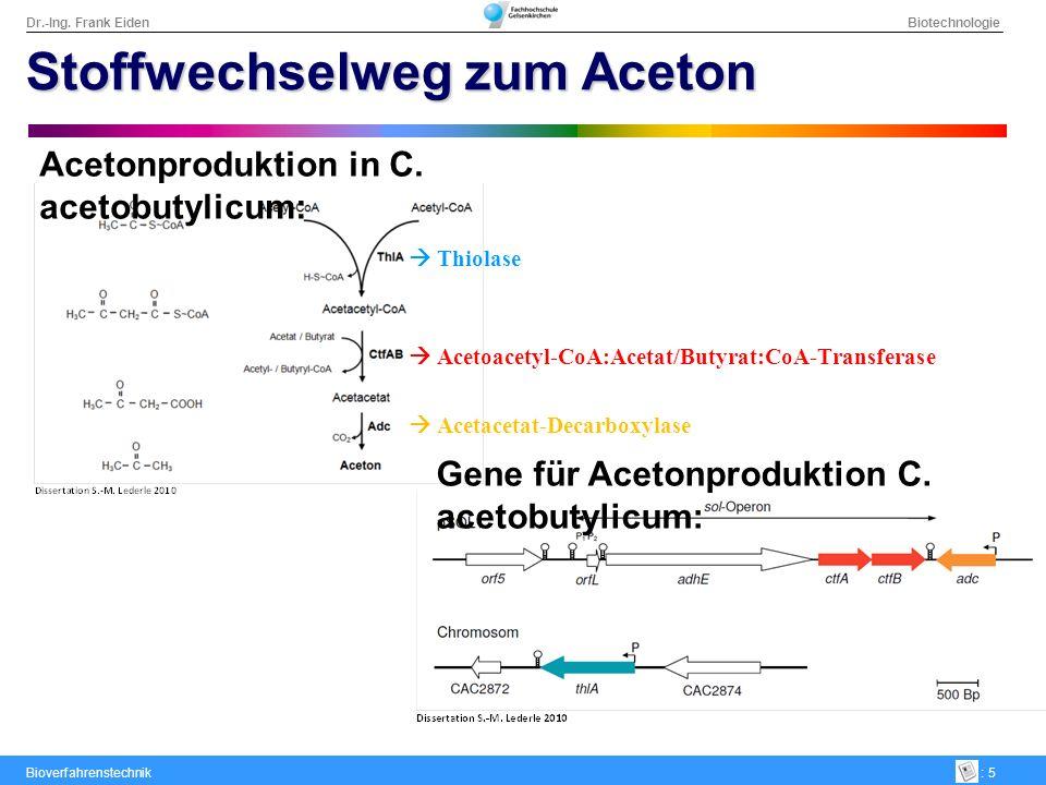 Dr.-Ing. Frank Eiden Biotechnologie Bioverfahrenstechnik: 5 Stoffwechselweg zum Aceton Acetonproduktion in C. acetobutylicum: Gene für Acetonproduktio