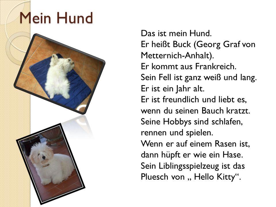 Mein Hund Das ist mein Hund. Er heißt Buck (Georg Graf von Metternich-Anhalt). Er kommt aus Frankreich. Sein Fell ist ganz weiß und lang. Er ist ein J