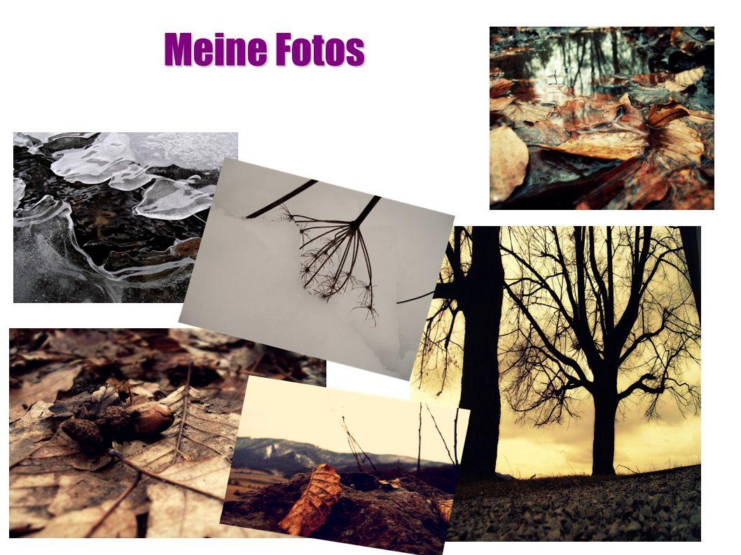 Meine Fotos