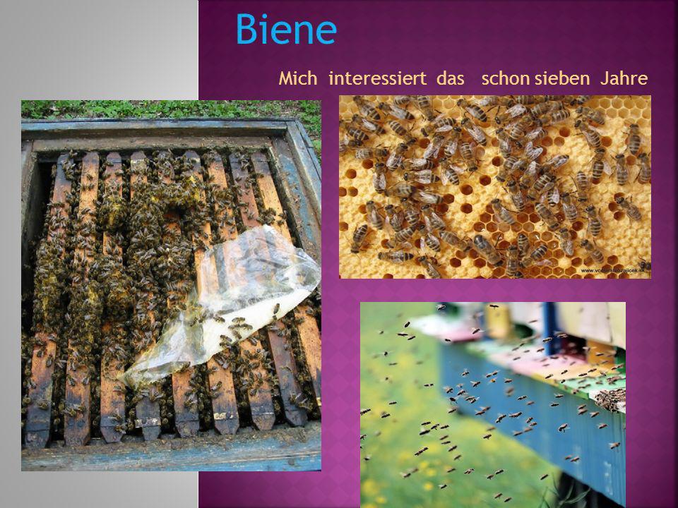 Mich interessiert das schon sieben Jahre Biene