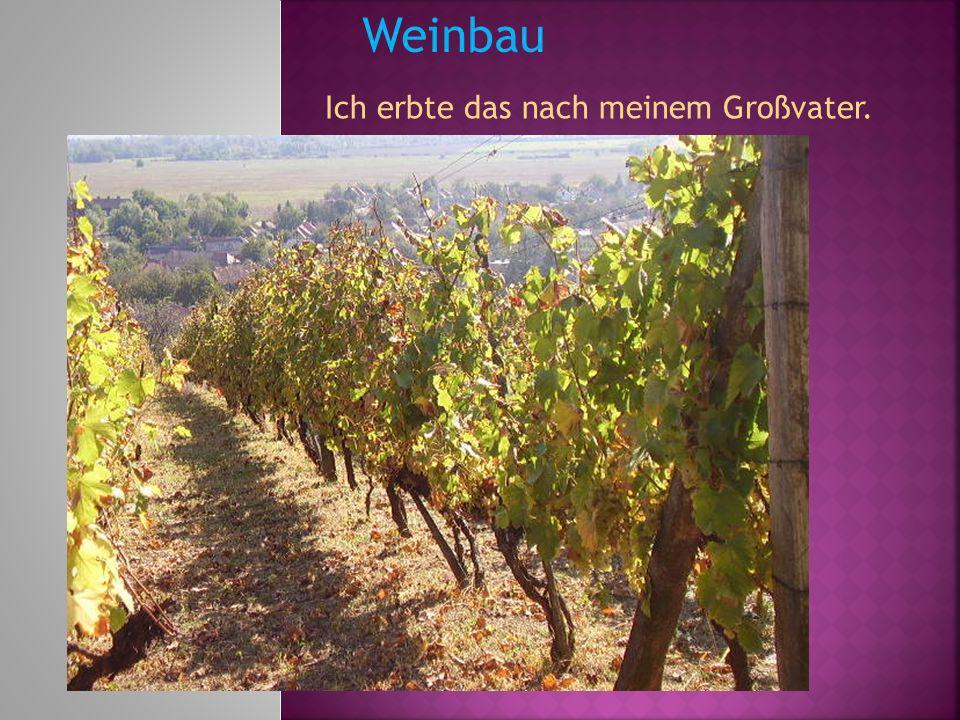 Weinbau Ich erbte das nach meinem Großvater.