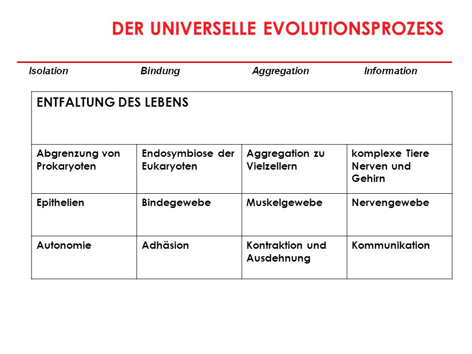 DER UNIVERSELLE EVOLUTIONSPROZESS ENTFALTUNG DES LEBENS Abgrenzung von Prokaryoten Endosymbiose der Eukaryoten Aggregation zu Vielzellern komplexe Tie