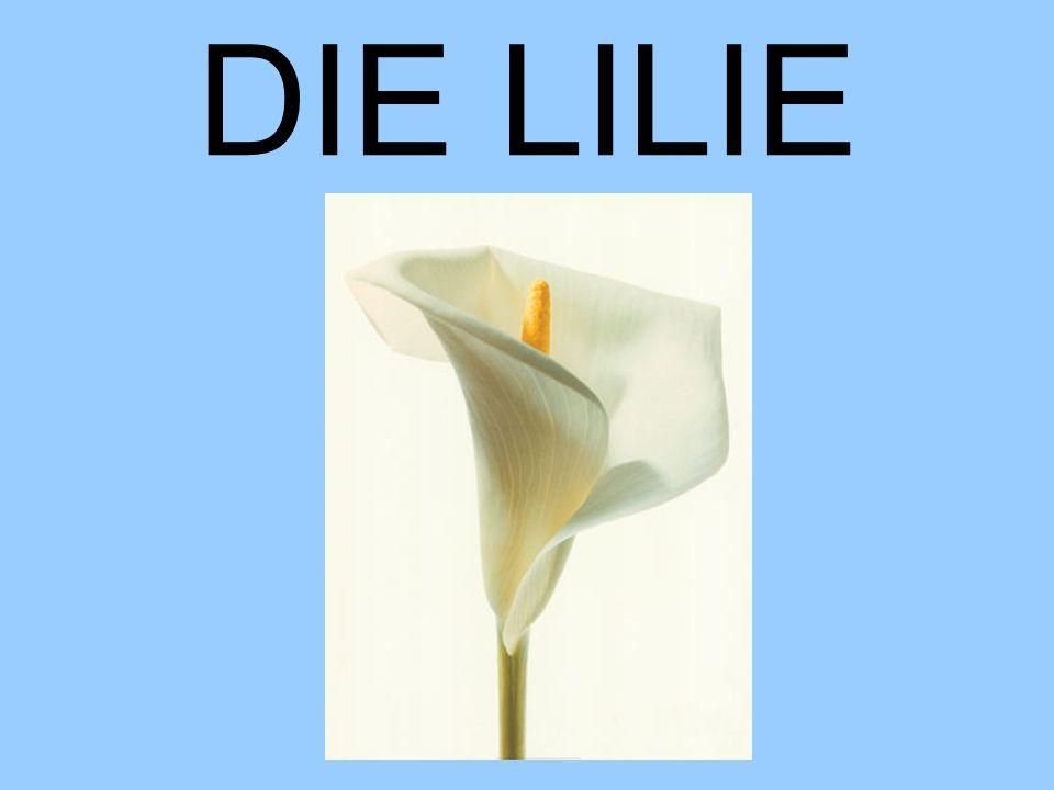 DIE LILIE