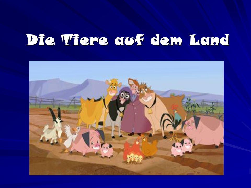 Die Tiere auf dem Land