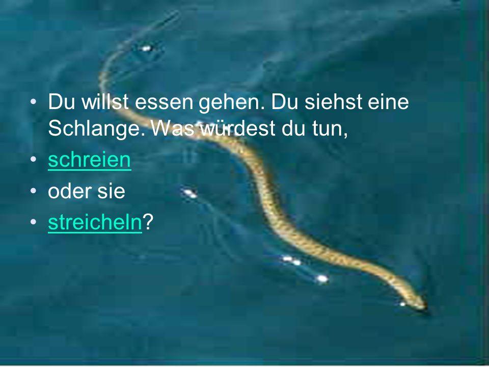 Du willst essen gehen. Du siehst eine Schlange. Was würdest du tun, schreien oder sie streicheln?streicheln