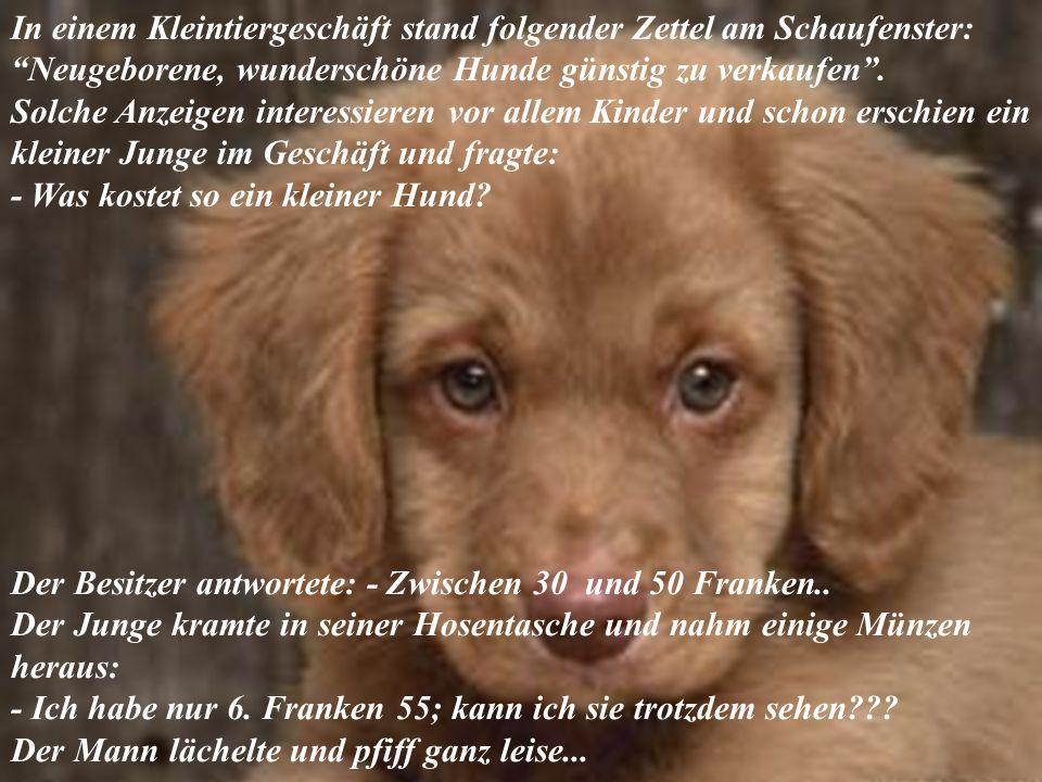 In einem Kleintiergeschäft stand folgender Zettel am Schaufenster: Neugeborene, wunderschöne Hunde günstig zu verkaufen.