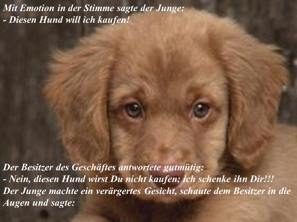 Mit Emotion in der Stimme sagte der Junge: - Diesen Hund will ich kaufen.
