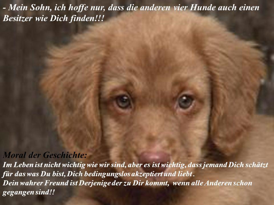 - Mein Sohn, ich hoffe nur, dass die anderen vier Hunde auch einen Besitzer wie Dich finden!!.